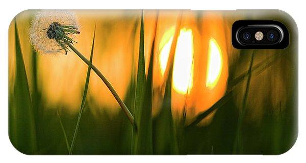 Flower Gardens iPhone Case - Sunbathing by Ricky Siegers