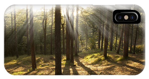 Sunbeams Through The Trees Phone Case by Paul Madden