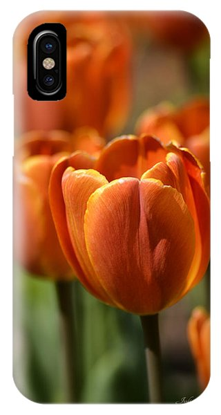 Sunburst Tulips IPhone Case