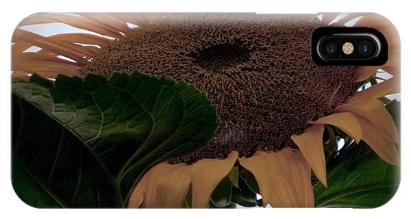 Sunflower 4 IPhone Case