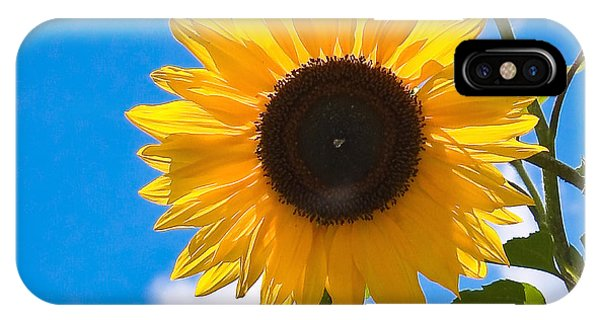 Sunflower And Bee At Work IPhone Case
