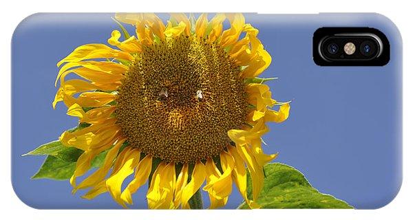 Sunflower At Latrun IPhone Case