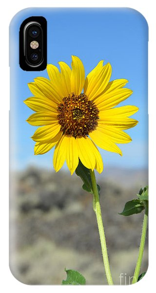 Sunflower By Craters Of The Moon IPhone Case