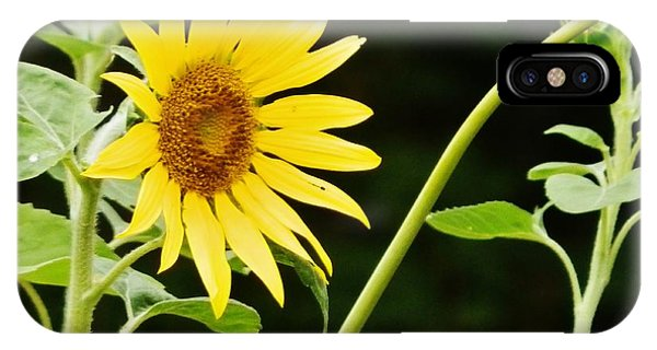 Sunflower Cheer IPhone Case