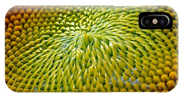 Sunflower iPhone Case - Sunflower  by Christina Rollo