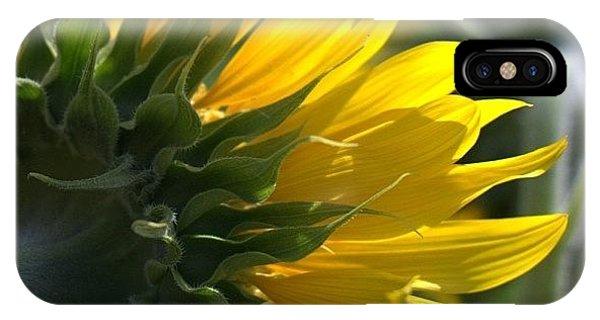 Colorful iPhone Case - #sunflower #closeup by Georgia Fowler