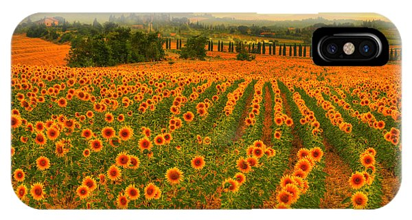 Sunflower Dream IPhone Case