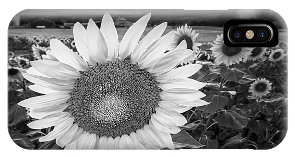 Sunflower Field Forever Bw IPhone Case