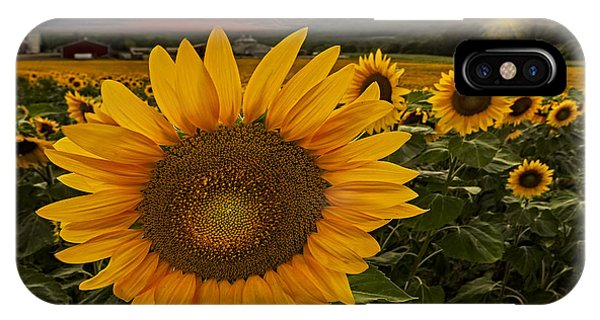 Sunflower Field Forever IPhone Case