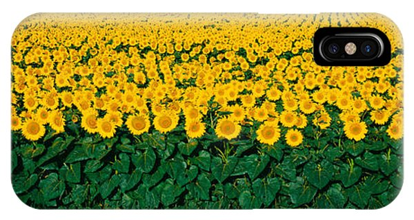 Sunflower Field, Maryland, Usa IPhone Case