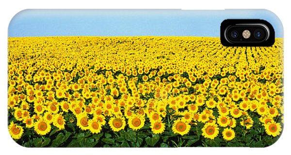 Floral iPhone Case - Sunflower Field, North Dakota, Usa by Panoramic Images