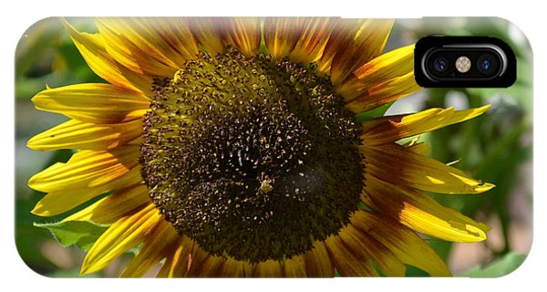 Sunflower Glory IPhone Case