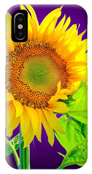 Sunflower Glow IPhone Case