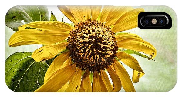 Sunflower In Window IPhone Case