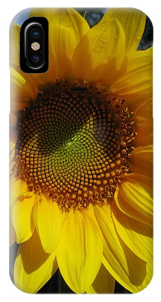 Sunflower  Phone Case by Laura Corebello