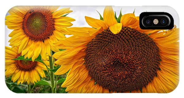 Sunflower Mama And Her Daughters  IPhone Case
