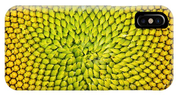 Sunflower iPhone Case - Sunflower Middle  by Tim Gainey