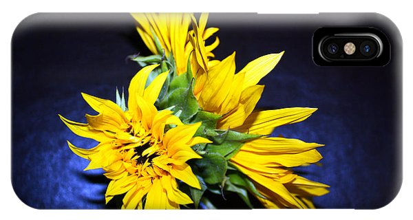 iPhone Case - Sunflower Portrait by Kelly Holm