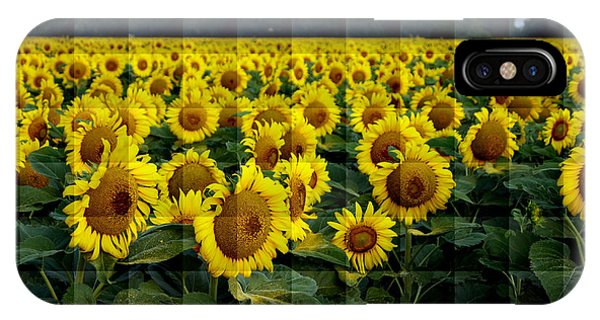 Sunflower Squared IPhone Case