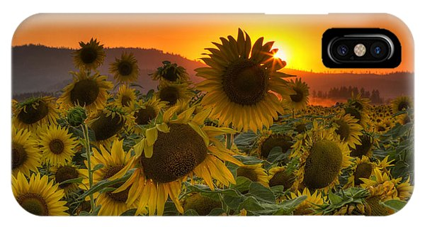 Sunflower Sun Rays IPhone Case