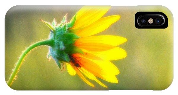 Sunflower Sunrise 6 IPhone Case