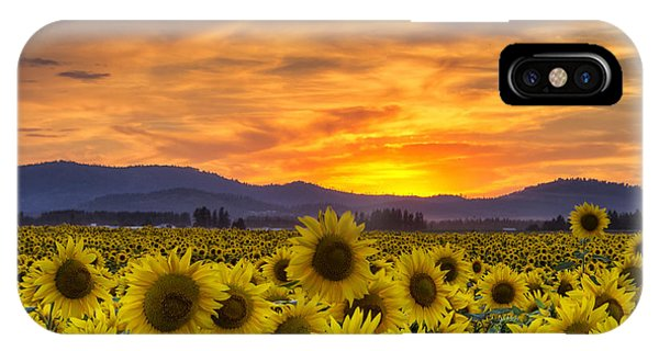 Sunflower Seeds iPhone Case - Sunflower Sunset by Mark Kiver