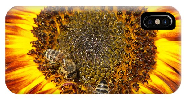 Orange iPhone Case - Sunflower With Bees by Matthias Hauser