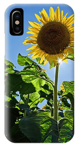 Sunflower With Sun IPhone Case