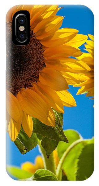 Sunflowers 2 Phone Case by Dasmin Niriella