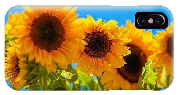 Sunflowers 3 Phone Case by Dasmin Niriella