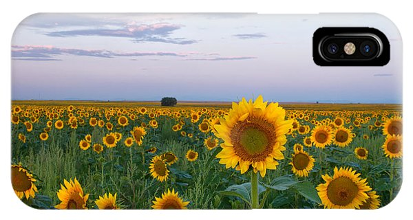 Sunflowers At Sunrise IPhone Case