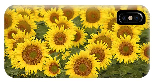 Sunflowers For Mom IPhone Case