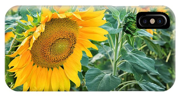 Close Focus Floral iPhone Case - Sunflowers For Wishes by Bill Wakeley