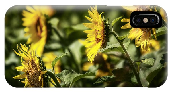 IPhone Case featuring the photograph Sunflowers In The Wind by Steven Sparks