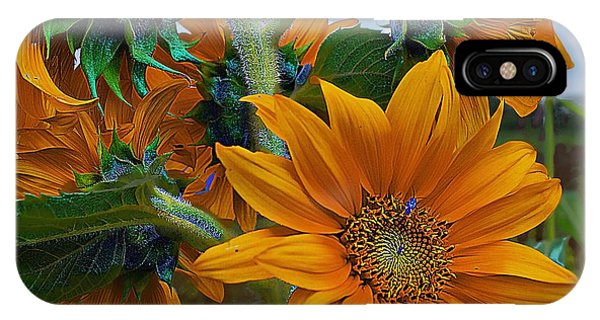 Sunflowers In A Bunch IPhone Case