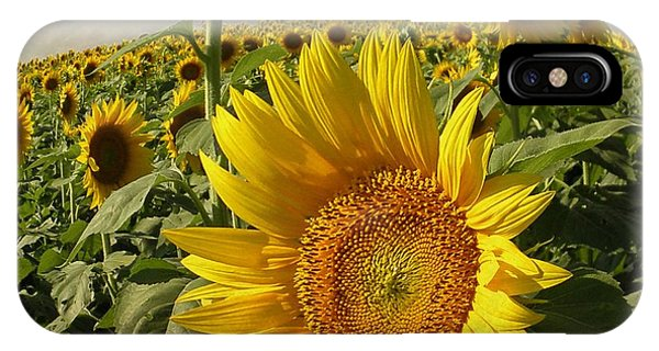 Blue Berry iPhone Case - Kansas Sunflowers by Chris Berry