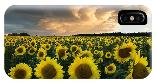 Agriculture iPhone Case - Sunflowers In Sweden. by Christian Lindsten