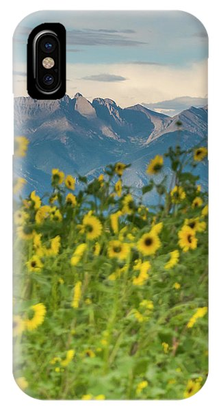 Sangre De Cristo iPhone Case - Sunflowers In The San Luis Valley by Kennan Harvey