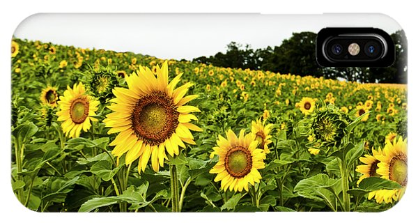 Sunflowers On A Hill IPhone Case