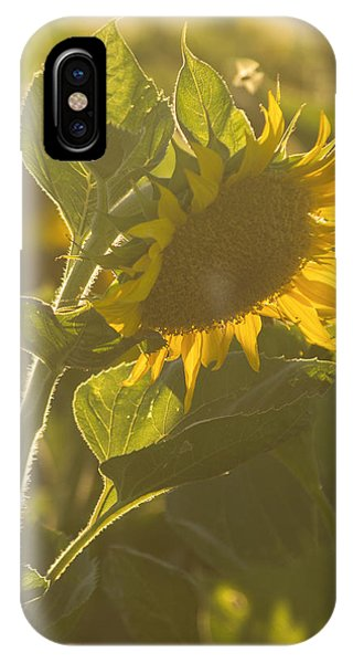 Sunlight And Sunflower IPhone Case