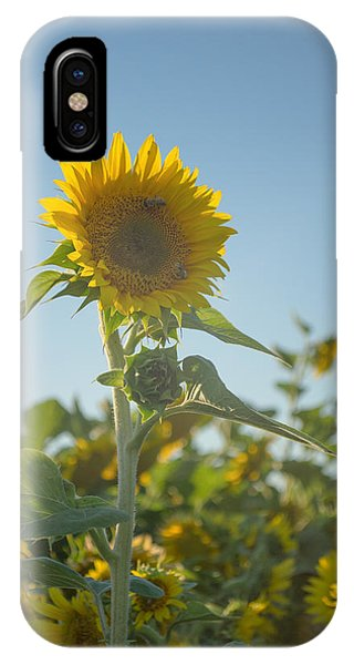 Sunlight And Sunflower2 IPhone Case