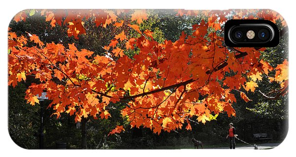 Sunlight On Red Maple Leaves IPhone Case