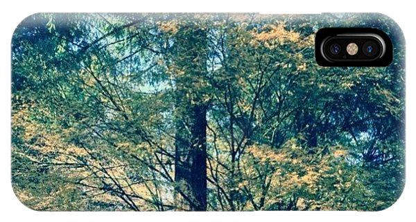 Sunny iPhone Case - Sunlight Through Vine Maples by Anna Porter