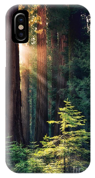 California iPhone Case - Sunlit From Heaven by Jane Rix
