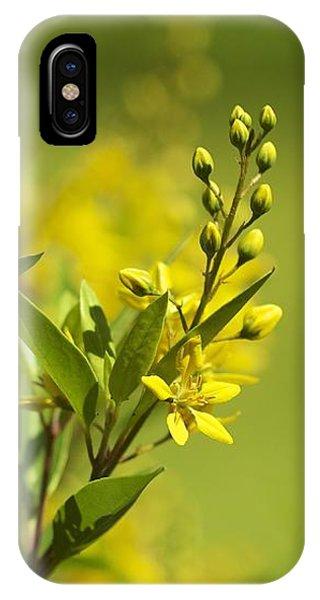 Sunlit IPhone Case