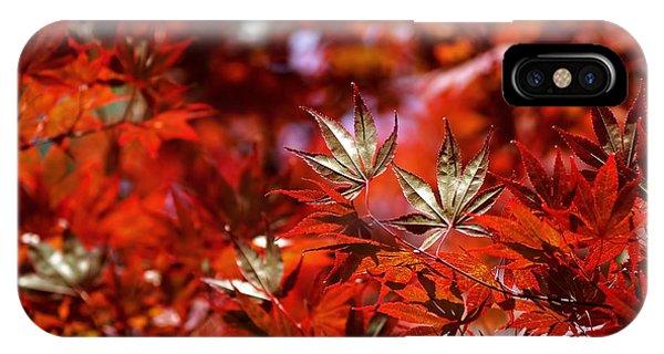 Sunlit Japanese Maple IPhone Case