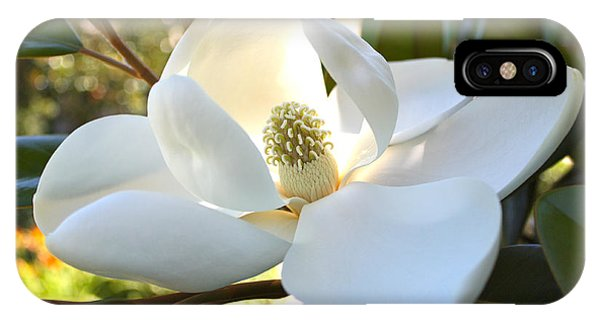Sunlit Southern Magnolia IPhone Case