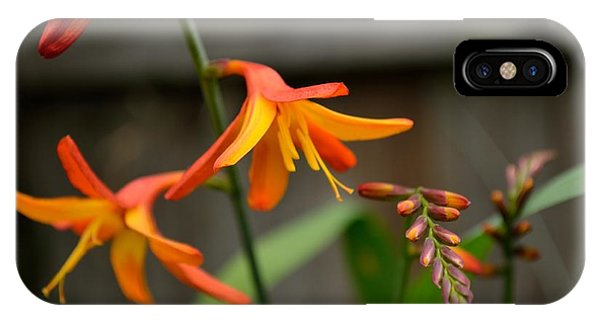 Sunny Crocosmia IPhone Case