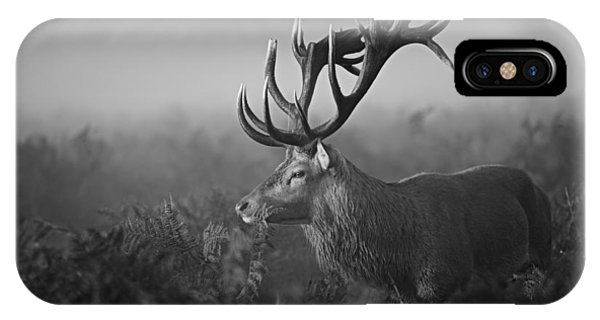 Stag iPhone Case - Sunny Morning by Robert Fabrowski