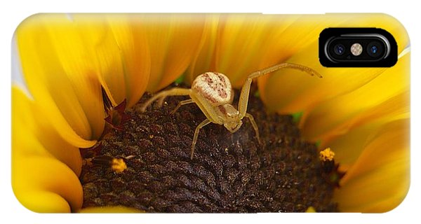 Sunny The Spider IPhone Case